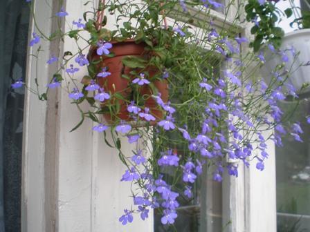 Комнатные растения :: - как выращивать красивое растения.